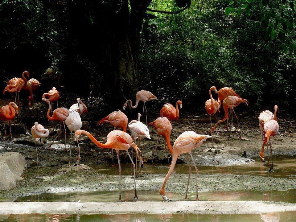 Birdwatching in Repubblica Dominicana