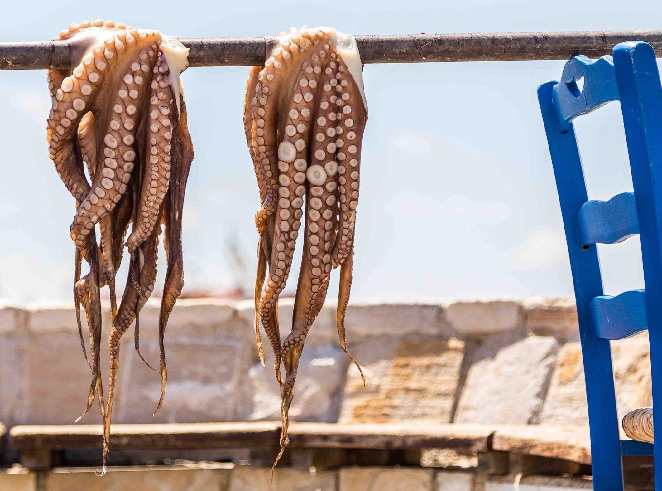 polpi pescati grecia