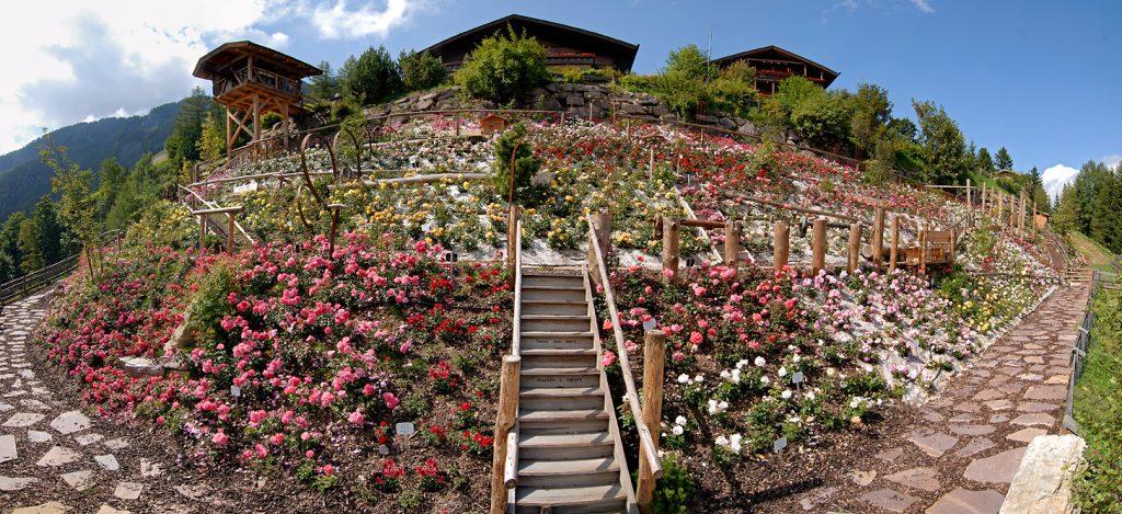 Roseto più alto d'Europa - @hotel Tyrol