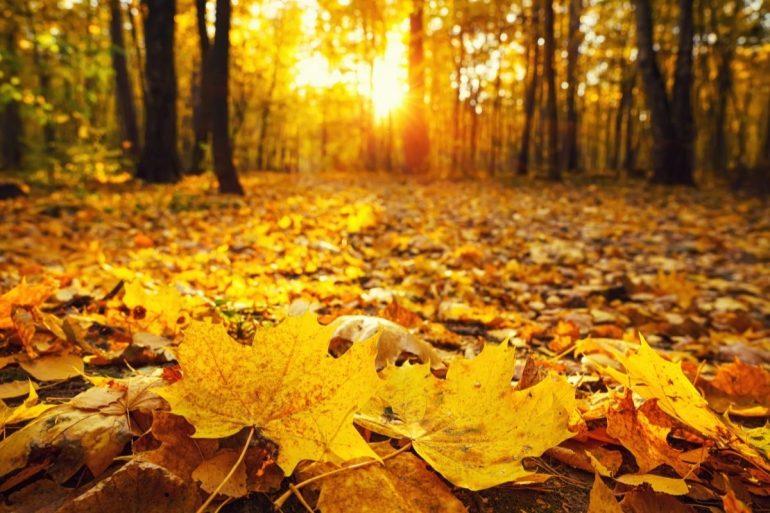 foliage dove vederlo