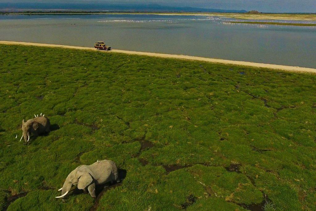Elefanti Amboseli Park Kenya
