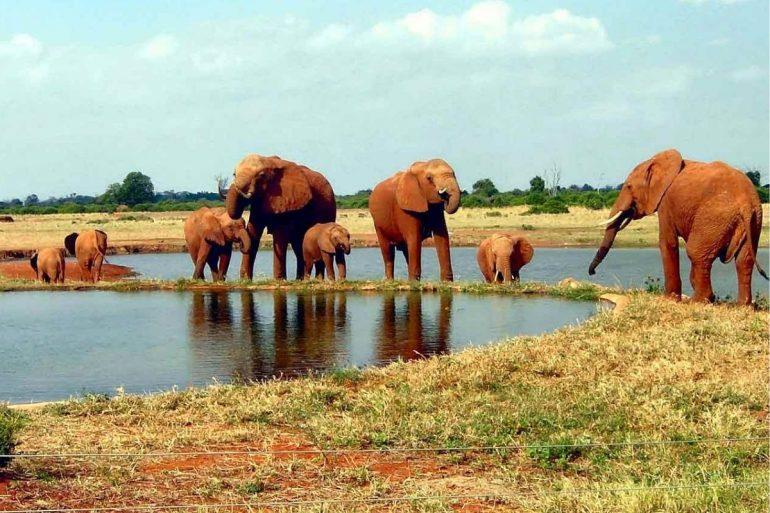 elefanti kenya parchi